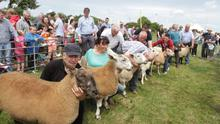 BLAST FROM THE PAST - Sheep judging gets under way at the 2015 Bannow & Rathangan Show in Killag showfield, Duncormick