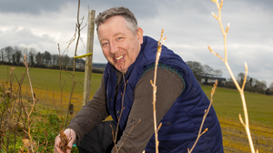 James O'Neill planting trees in Rathgarogue. Photos: Mary Browne