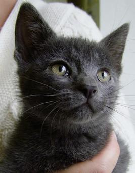 Sammy's owners were astonished: they had been told that she was a girl, and they had just assumed that this was correct, when in fact he is a male!