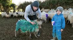 Gus Connick and son Tommy on his farm with some of the sheep that were attacked by dogs