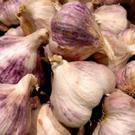 Garlic supports immunity and can reduce mucous, phlegm, and congestion