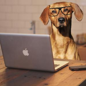 In the future, will vets have online consultations with pets?