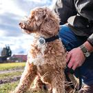 Collar monitors keep an accurate record of dog activity