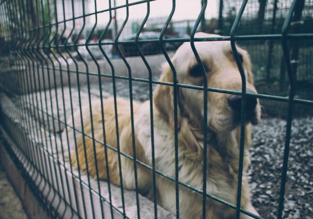 The kill rate in dog pounds is lower than it has ever been