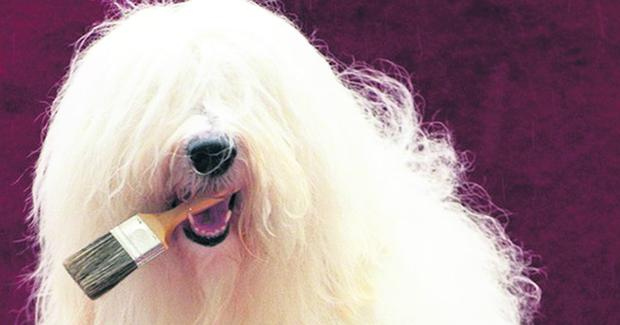 Iconic Dulux dog to pa...