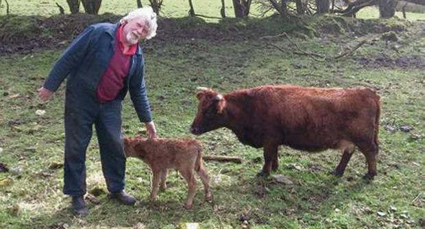 Farmer Henry Judge with Ella and her new calf Patrick