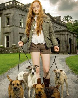 Gillian Fallon takes a walk with two terriers and two whippets in the grounds of Temple House, Ballymote, where preparations are underway for the Northwest Working & Gun Dog Fair on Sunday September 28.