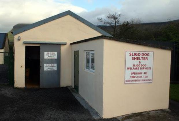 Sligo Dog Shelter which is operated by the County Council