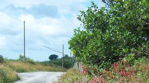 Roadside hedgerows and treelines are important habitats for wild plants, nesting birds, insects, small mammals, and other wildlife.