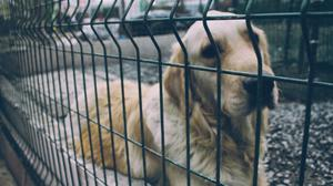 Thousands of dogs are abandoned in Ireland every year.