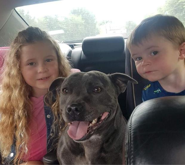 Aoibhinn (7) and Ruairi (3) pictured with beloved                   pet Bella.