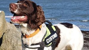 Sniffer dog Flynn, which aided in the seizure of the cash.