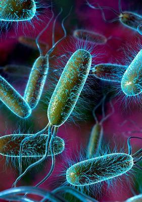 E. Coli is a very common and widespread bacterium