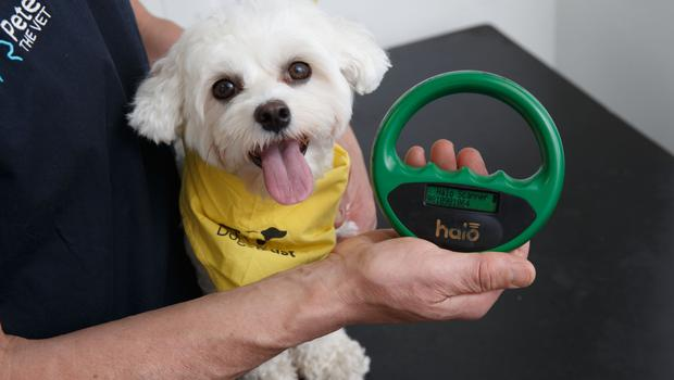 Every dog owner should have a microchipping certificate