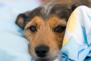 A safe and cosy night's sleep is the least we can offer our pets