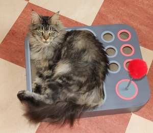Pete's cat Peig enjoys curling up and sleeping in her new toy
