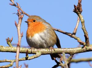 Every bird species has its own distinctive song