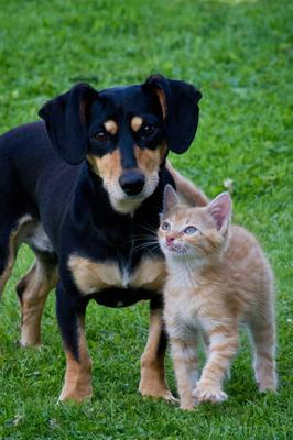 Parasite control is important for dogs and cats