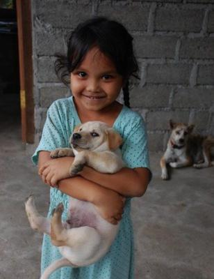 Vaccinating dogs against rabies can eliminate the virus globally.Pic: Dr Kate Hampson 2015