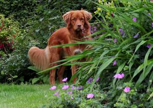 Dogs and cats enjoy gardens just like we humans do