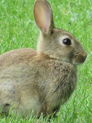 Rabbits eat their own droppings to gain more nourishment.