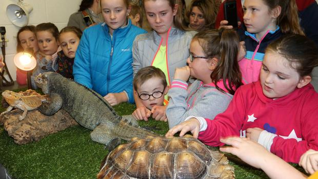 Kids having fun with the wild animals at the open day at O'Shea and Bramley Veterinary Hospital on Wednesday afternoon.