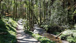 Tintern Woods often had more than 10,000 visitors a month