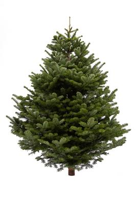 Shred your real Christmas tree for free