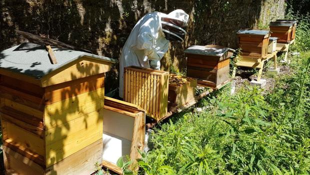 The apiary in Johnstown Castle.