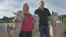 Carmel Mahony and Geoff Young with the alpacas. PHOTO BY AARON O'REILLY.
