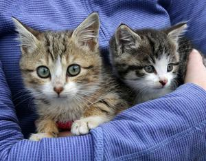 Two of the kittens at the WSPCA