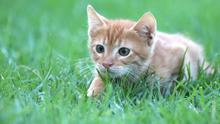 Cats have a strong instinct to hunt, even as kittens