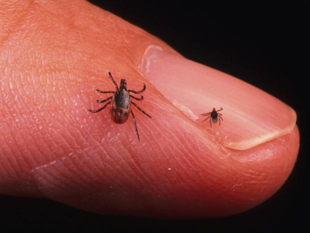 Lyme Disease is transmitted to people by infected ticks