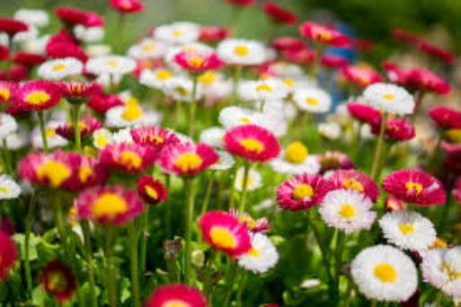 The hay fever season can extend from March to October