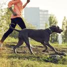 A dog can be a huge aid in the bid to get out and about and get fit.