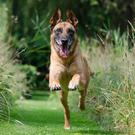 Dogs love being taken for walks, and not just for exercise