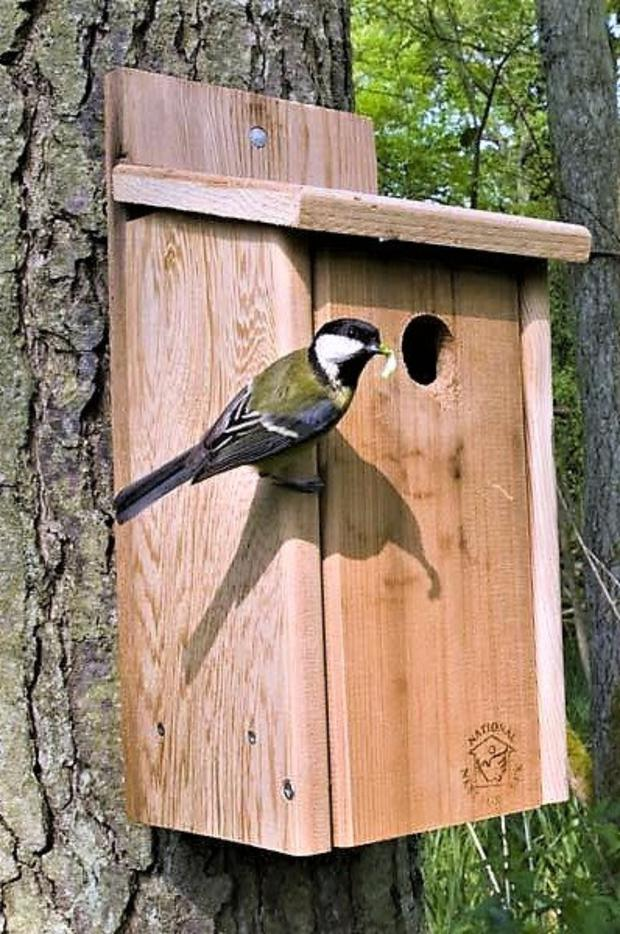 A Great Tit carrying food to its family in a nest box