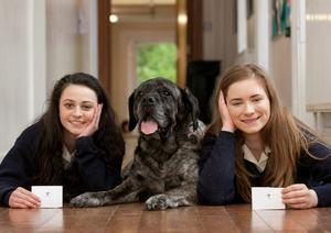 "Saoirse O'Reilly (left) and Rachael Milea  with Lucy the German Mastiff. Dominican College Wicklow, ""The Nose Knows,"" Young Scientist Project"