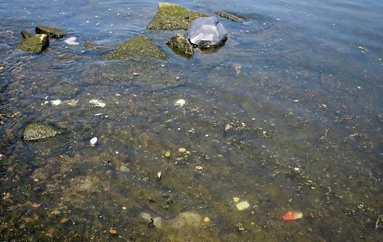 Raw sewage and bags of domestic rubbish dumped in the river at Arklow