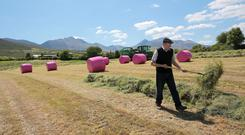 Perfect in Pink...Michael Foley, farming in Beaufort, Co Kerry, with The MacGillycuddy's Reeks in tgeh back ground, taking advantage of the fine weather for baling silage, and also