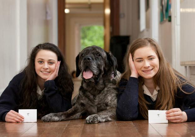 Saoirse O'Reilly (left) and Rachael Milea with Lucy the German Mastiff. Dominican College Wicklow,