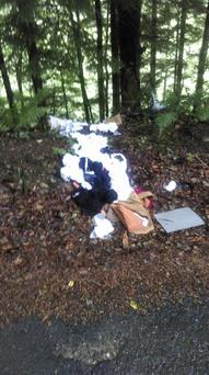 Dumping in the woods