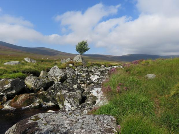 'The Wicklow Mountains are magnificent' says Michael Fewer, who snapped this photo