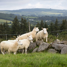Aughrim Sheep Show has launched a new book marking its 50th anniversary