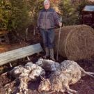 PJ O'Dea beside some of the sheep killed in last week's dog attack