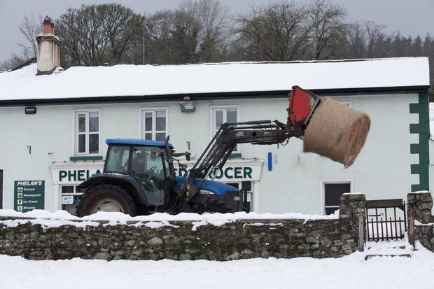 A farmer bringing hay to their animals in Ballinaclash on Saturday.