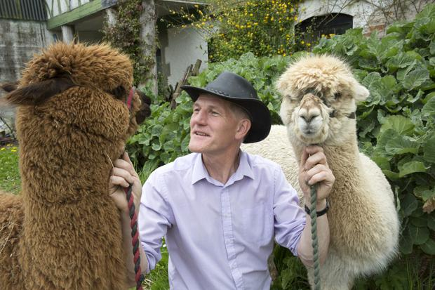Alpaca Joe – aka Joe Phelan – with two of the members of his flock
