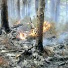 The fire at Ballinastraw Wood