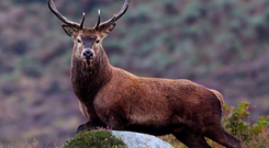 The new project will tackle the unsustainable deer population in Wicklow