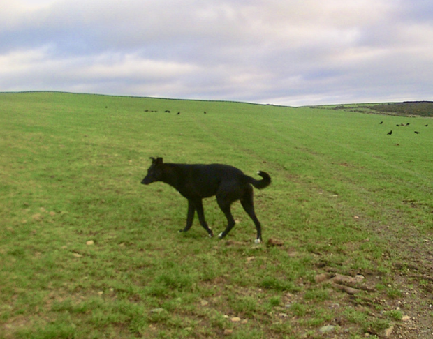 The black dog was shot and killed on January 13 by a hunter